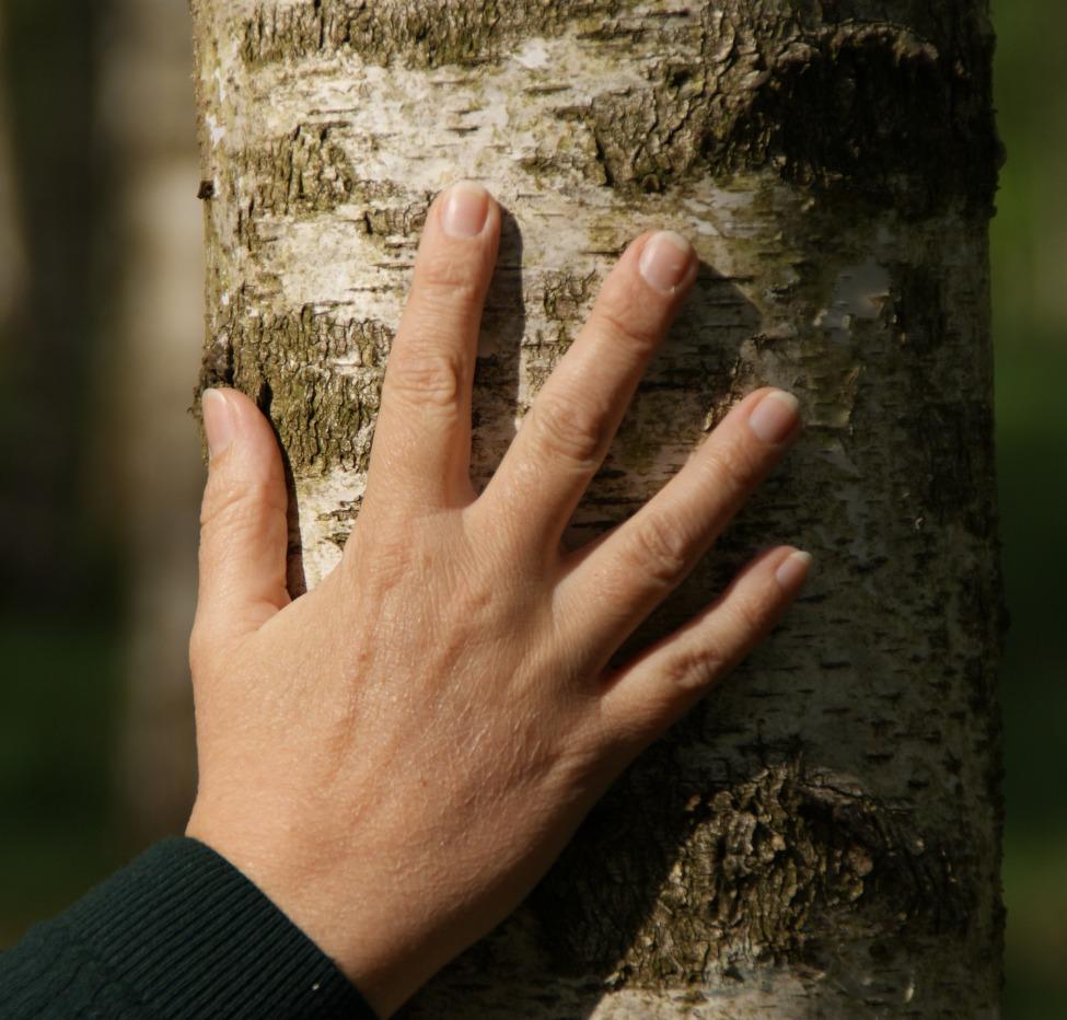 Hadewig - Hand - Hout
