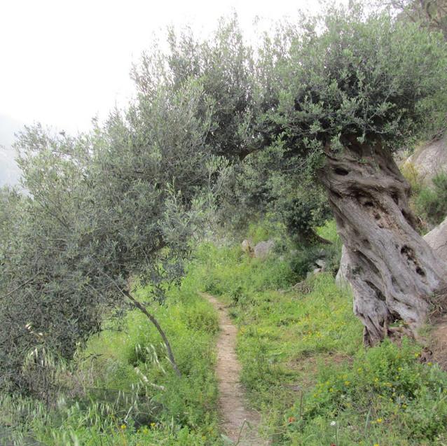 Kreta_en_Andalusië_(109)