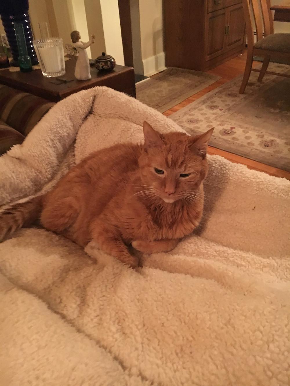 Ginger Bear resting on the sofa