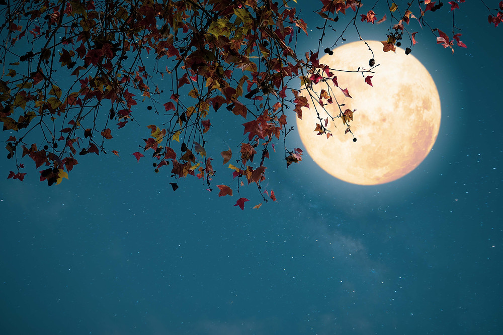 Fall moon behind the leaves