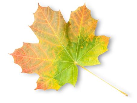 The Last Leaf on the Tree and Gratitude