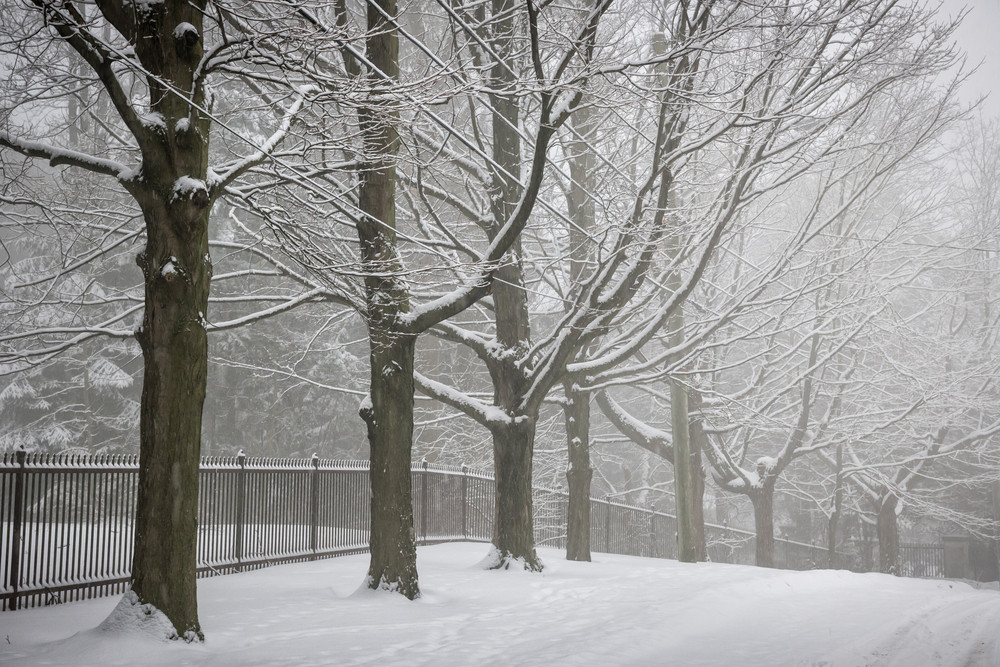snowy trees 234578956.jpg