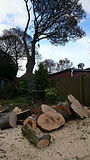 Tree surgeon bedford Tree surgeon milton keynes Tree surgeons bedford