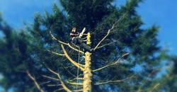 Tree Surgeon Bedford