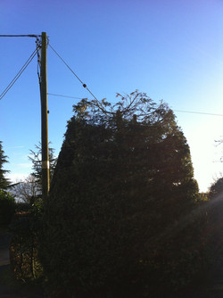 Hedge reduction After