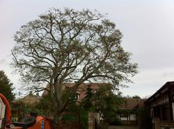Acacia Reduction finished