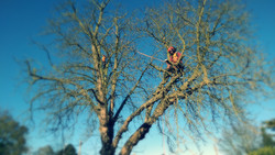 Dual  tree surgeons in letchworth