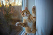 cat-1115054_1280.jpg