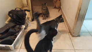 רפואה אישית - חתולים
