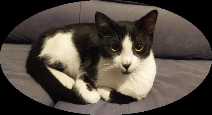 טיפטיפ החתול על הספה