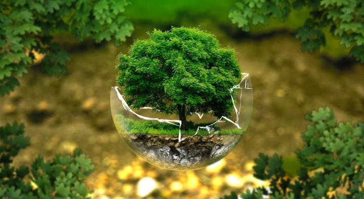 עץ בתוך בועת זכוכית מנופצת