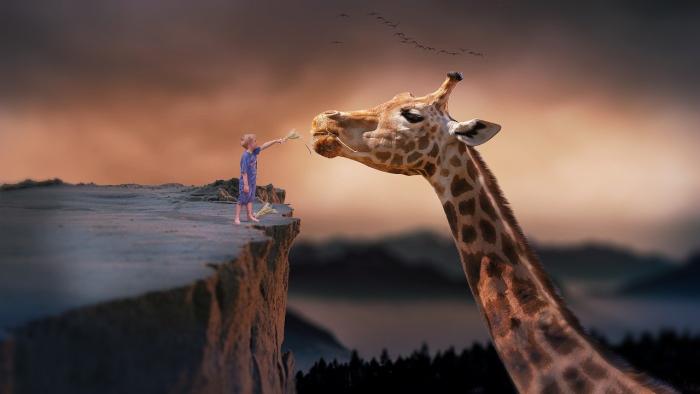 a child petting a huge giraffe