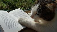 חתול שקורא ספר
