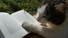 notniceguys-book-reading-cat.png