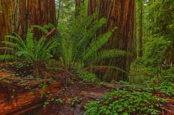 Oregon Coast and Redwoods