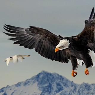 Chilkat Alaska.jpg
