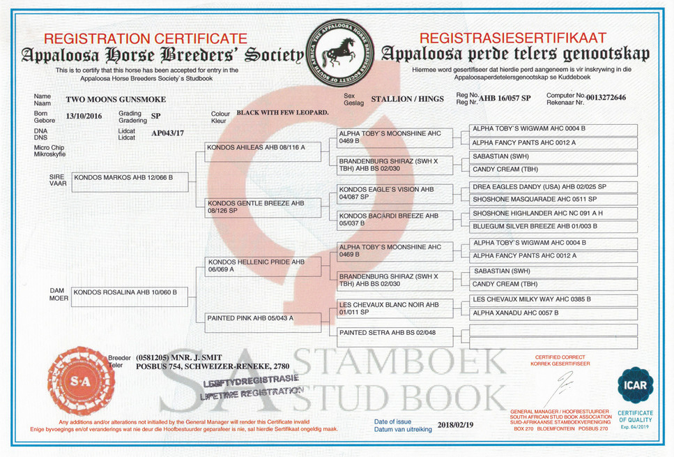 Two Moons Gunsmoke AHBSSA Certificate (SA)