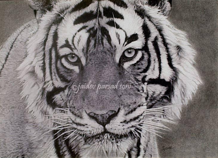 """Tiger Male"" - Original Artwork by Jaidev Prasad Soni - India"