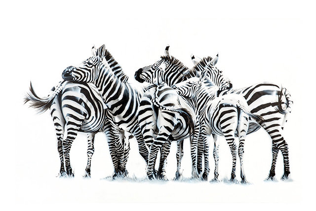 """Zebras in Mara"" - Fine Art Print  - by Stefanie Gendera - Germany"