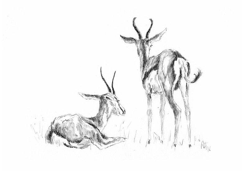"""""""springbock#1"""" - original charcoal sketch"""