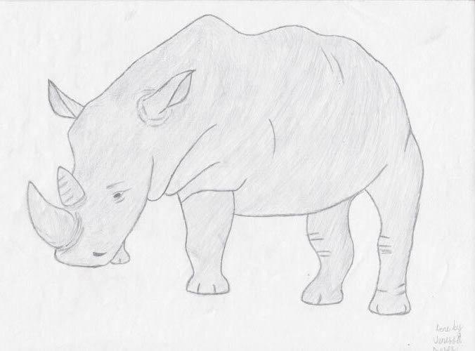 """Rhino"" - by Vanessa - Namibia"