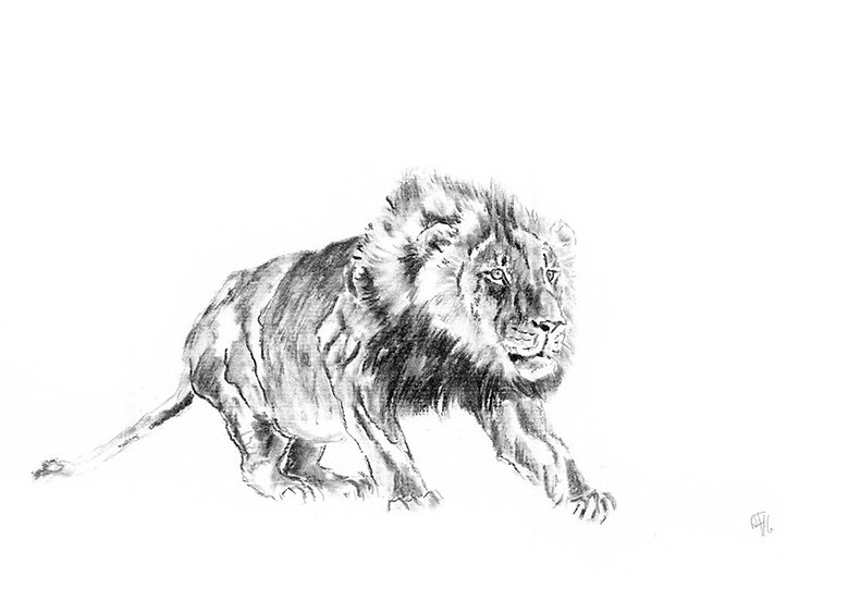 """lion#4"" - original charcoal sketch"