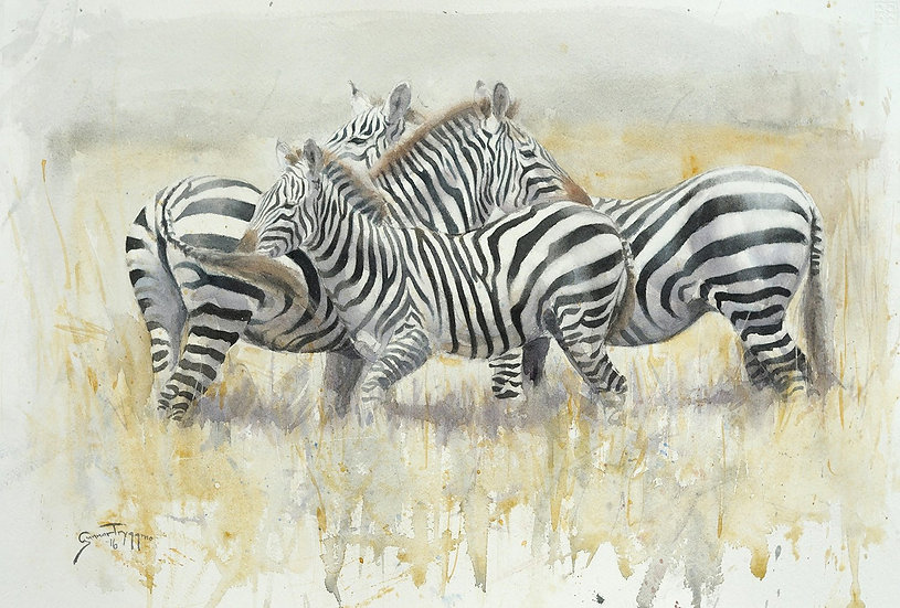 """Zebra Group"" - Original Watercolour - by Gunnar Tryggmo (Sweden)"