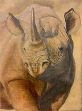 Point of a Rhino