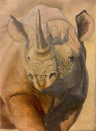 Point of a Rhino