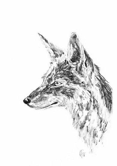 """jackal#5"" - original charcoal sketch"