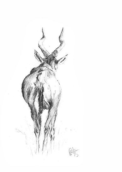 """hartebeest"" - limited edition Fine Art Print - signed"