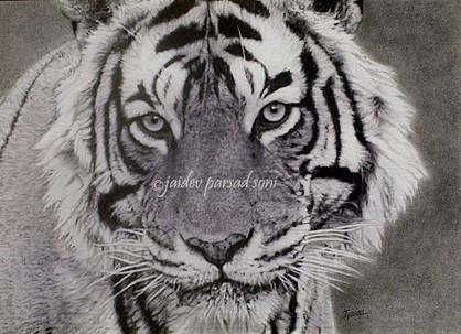 Tiger Laxmi