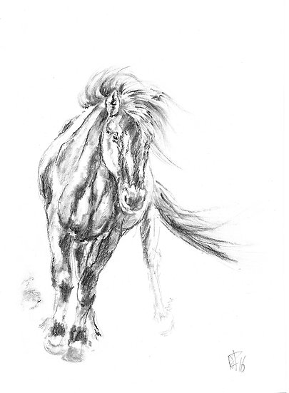 """icelandic horse"" - original charcoal sketch"