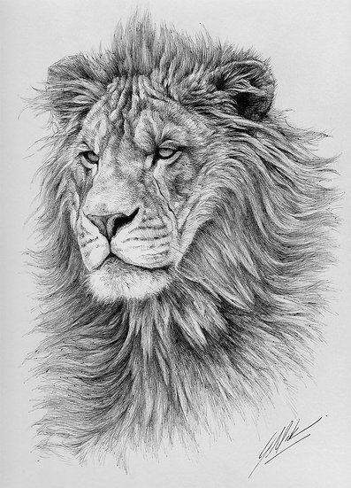 """""""Proud Prince"""" - Original Drawing - by Justin Mark (Canada)"""