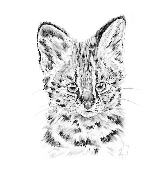 """""""Little Hunters"""" - Greeting Card single - Serval"""