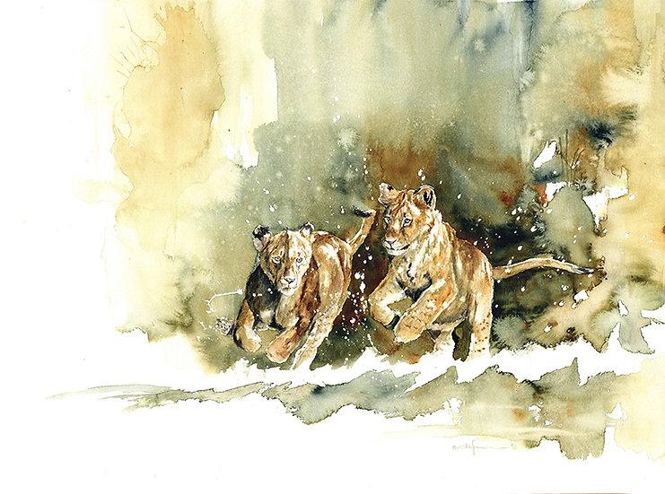 """jolly""- original watercolour painting - by Annika Funke - Namibia"