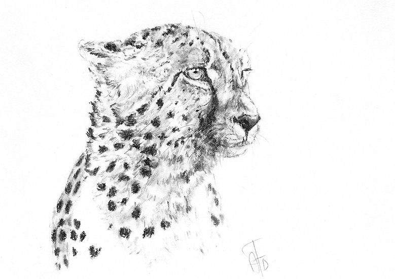 """""""cheetah#2"""" - limited edition Fine Art Print - signed"""
