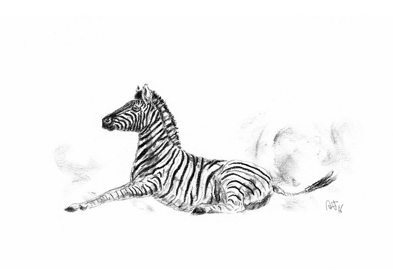 """zebra#3"" - original charcoal sketch"