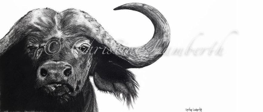 """buffalo"" - Fine Art Print - by Cristine Lamberth - South Africa"