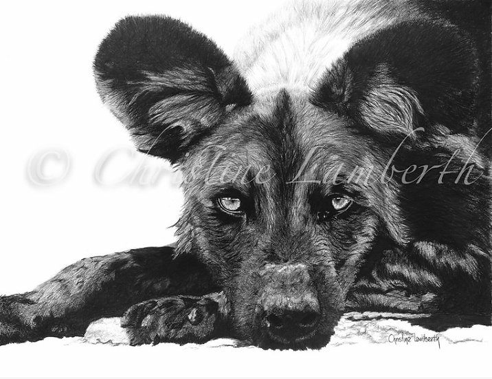 """I am a wild dog"" - Fine Art Print - by Cristine Lamberth - South Africa"