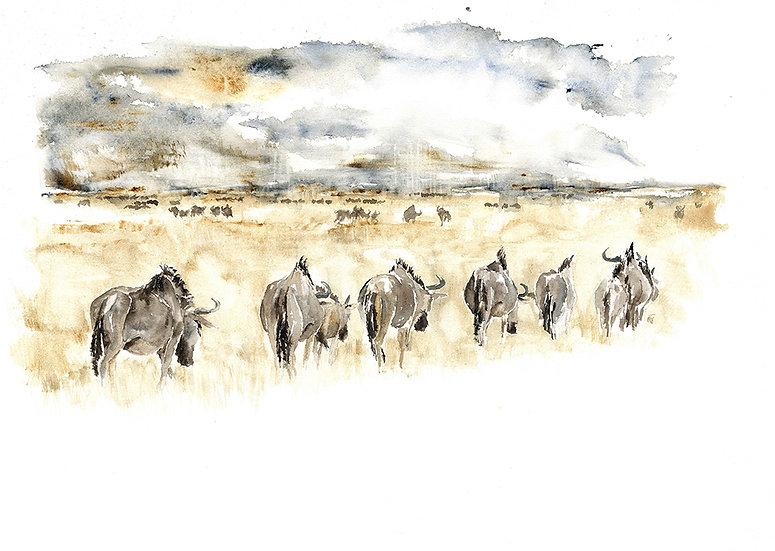 """wildebeest sketch"" - original watercolour painting"