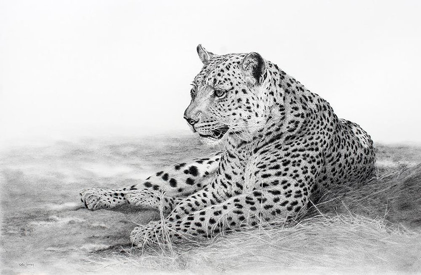 "'Dappled Light"" - Original Pencil Drawing- by Kate Jenvey (Australia)"
