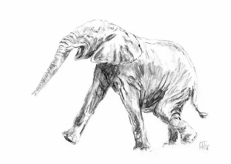 """""""elephant#2"""" - original charcoal sketch"""