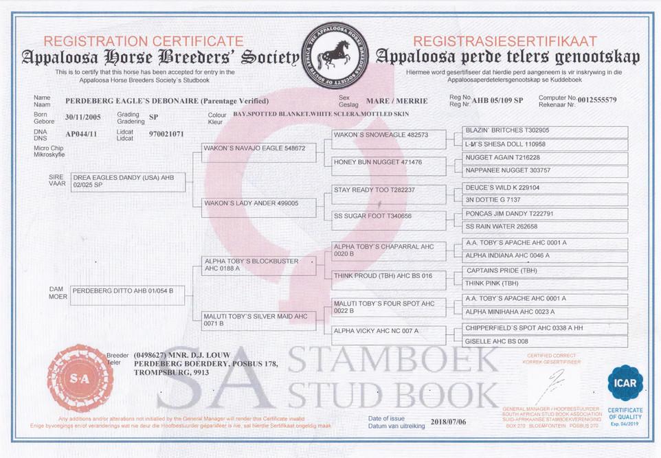 Perdeberg Eagle's Debonaire AHBSSA Certificate (South Africa)