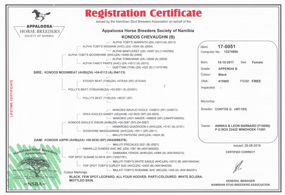 Chevaughn NSBA Certificate (Namibia)