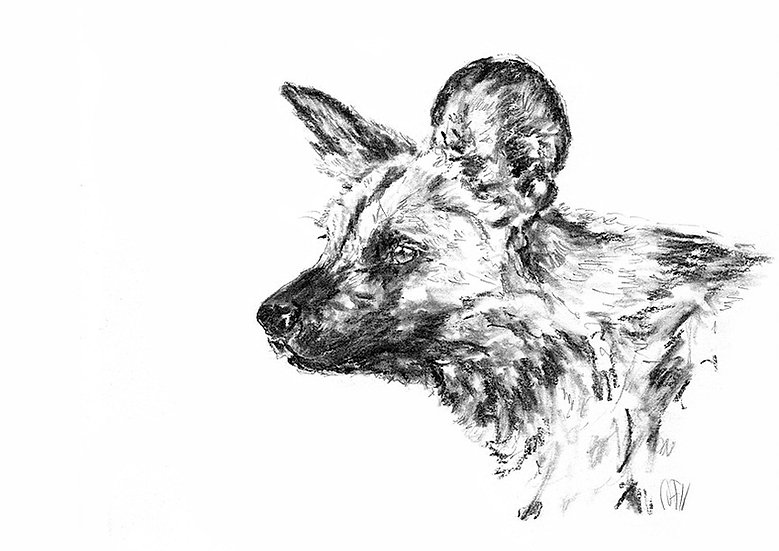"""wild dog#3"" - limited edition Fine Art Print - signed"