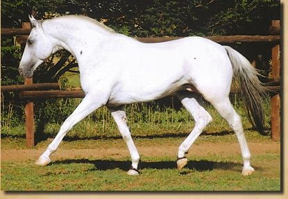 Sire of Sire: Alpha Toby's Moonshine