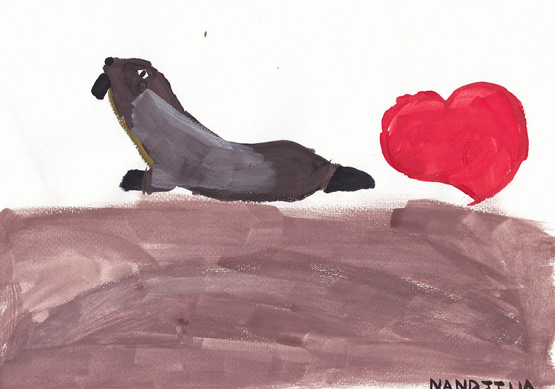 """cape fur seal"" - by Nandjila - Namibia"