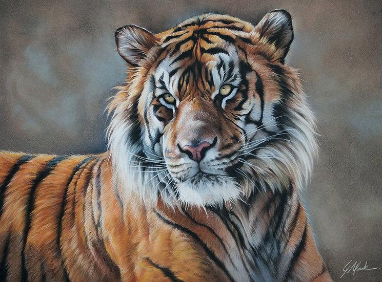 """Harimau"" - Original Pastels - by Justin Mark (Canada)"