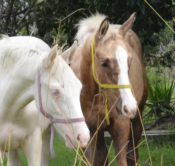 Daisy as foal